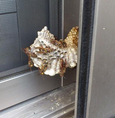 蜂の巣だぁ〜