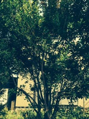 毛虫に食まれる木
